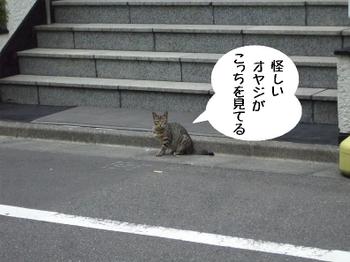 20110629001_2
