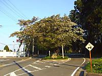 20120420002
