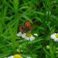 蝶と花その3