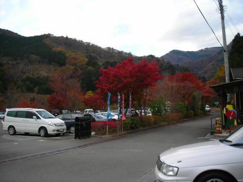 駐車場付近の紅葉