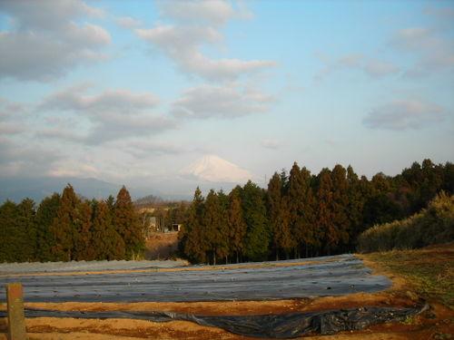 朝日に輝く富士山