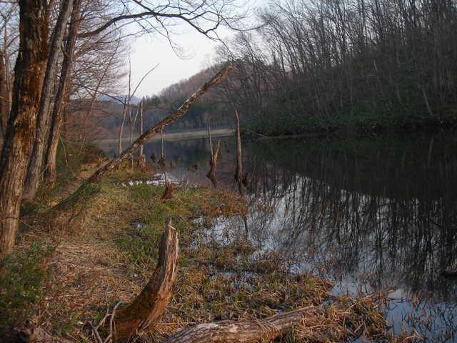 静かに水をたたえる湿原