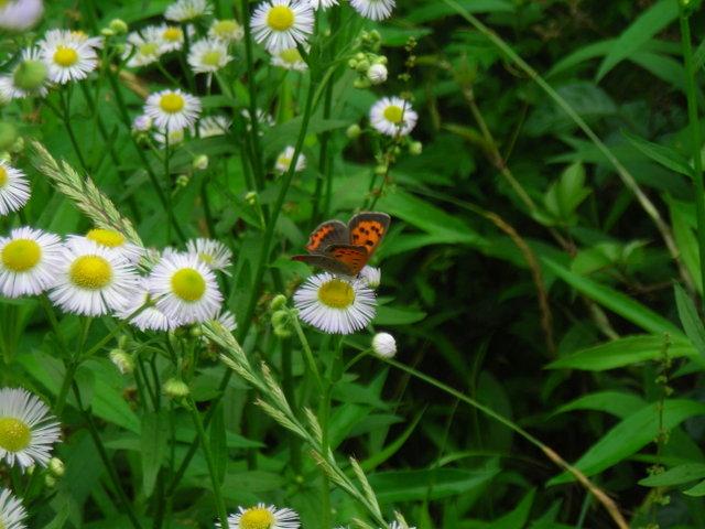 蝶と花その1