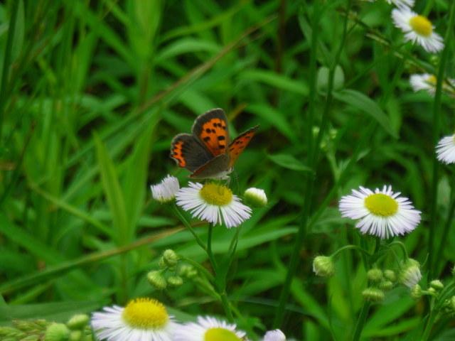 蝶と花その2